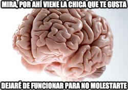 Enlace a Cerebro, ahora necesito que funciones