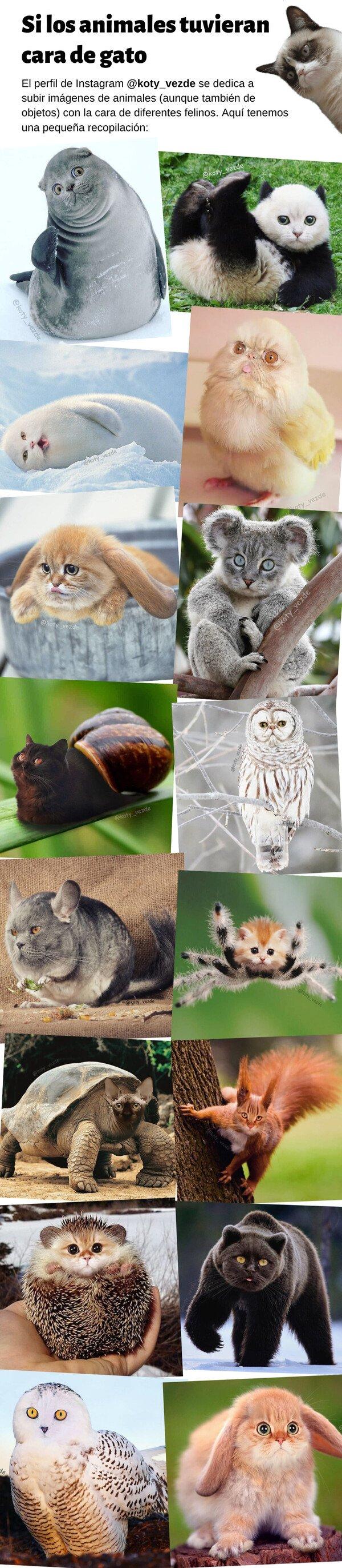 Meme_otros - Si los demás animales tuvieran cara de gato