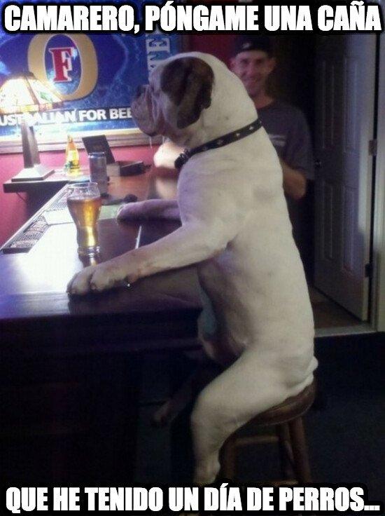 Meme_otros - No hay nada como desahogarse en el bar