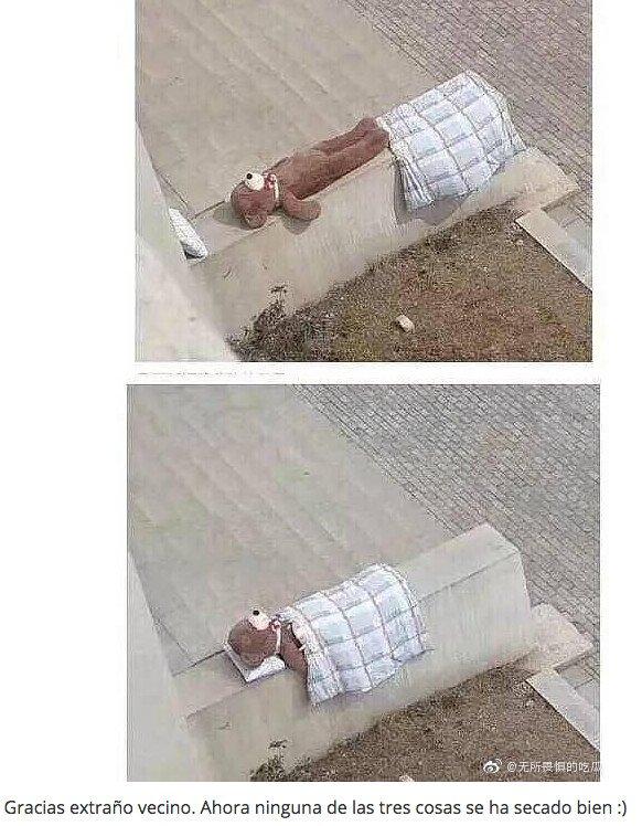 Meme_otros - Mi vecino solo quería arropar al pobre oso