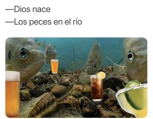 Meme_otros - Por alguna extraña razón, los peces reaccionaron así