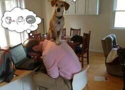 Enlace a Cuando juegas al escondite con tu perro