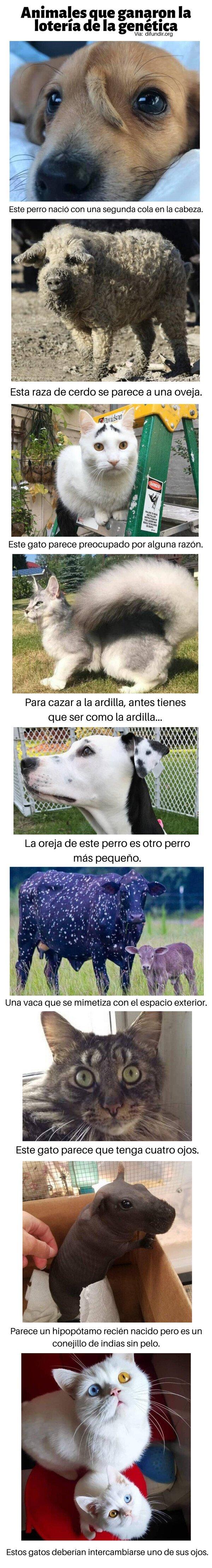 Meme_otros - Animales que ganaron la lotería de la genética