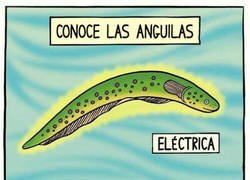 Enlace a Las anguilas son como las guitarras