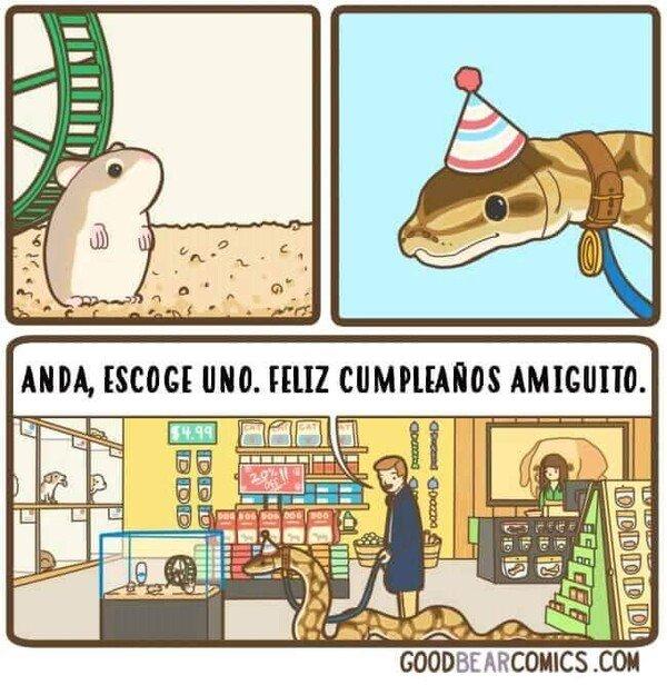 cumpleaños,hámster,regalo,serpiente