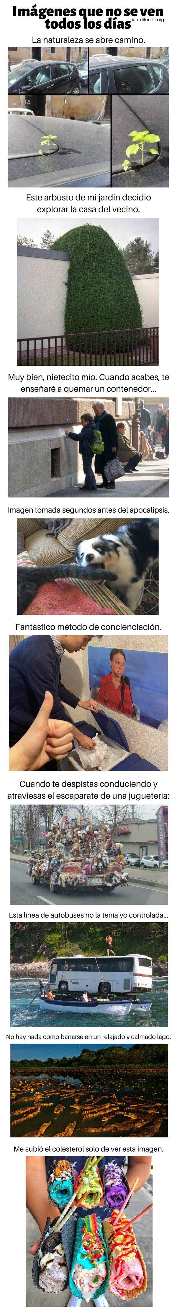 Meme_otros - Imágenes que no se ven todos los días