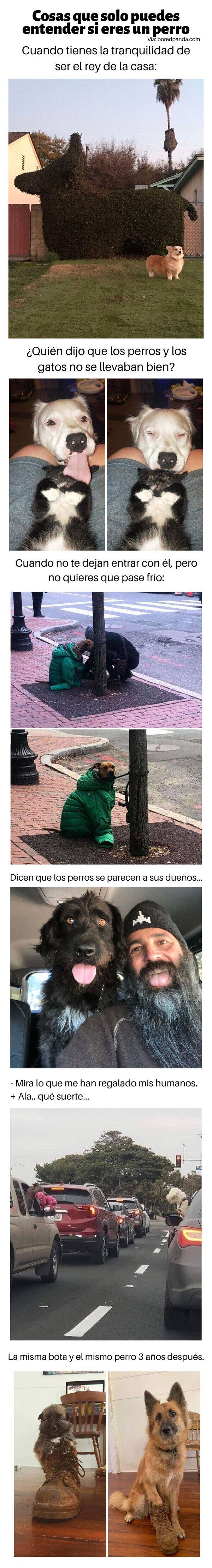 Meme_otros - Cosas que solo puedes entender si eres un perro
