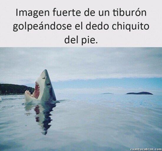 Meme_otros - El tiburón dramático