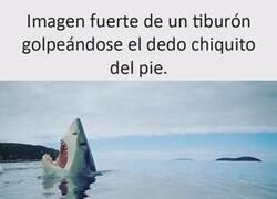 Enlace a El tiburón dramático