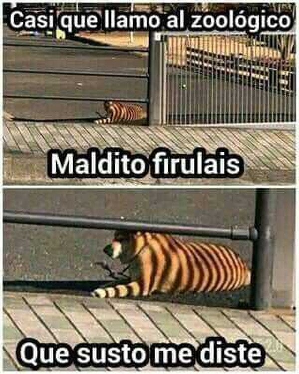Meme_otros - Maldito Firulais