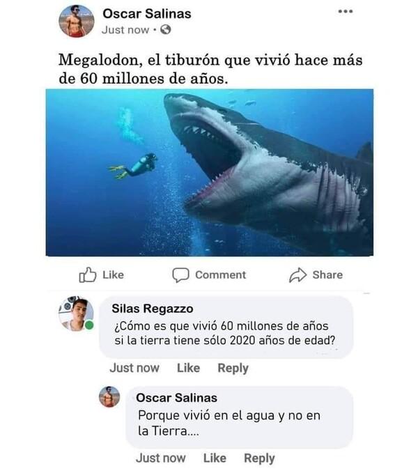 Meme_otros - El Megalodon merecía vivir más que ellos