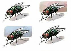 Enlace a Haz como las moscas