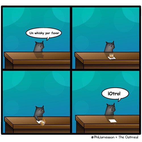 gatos,vaso,whisky