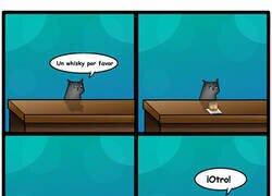 Enlace a Simplemente gatos
