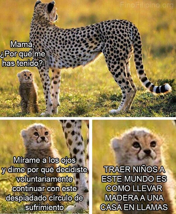 cría,hijo,leopardo,madre