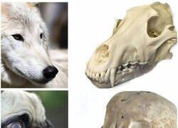 Enlace a Natural evolution vs Artificial evolution