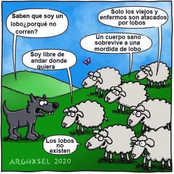 Meme_otros - Si las ovejas fueran tan estúpidas como los humanos