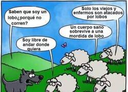 Enlace a Si las ovejas fueran tan estúpidas como los humanos