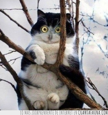 foto,gato,humor
