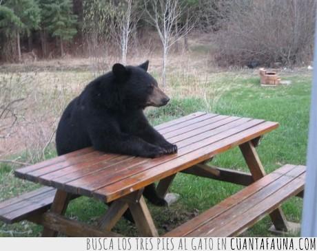 mesa,miel,oso,oso paciente,paciencia