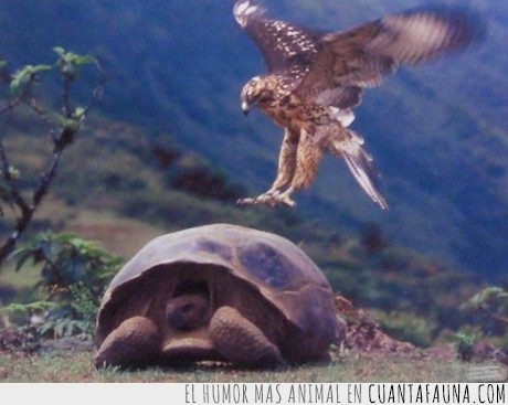 águila,animales,optimismo,tortuga