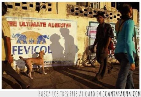 pareja,perro,sombras
