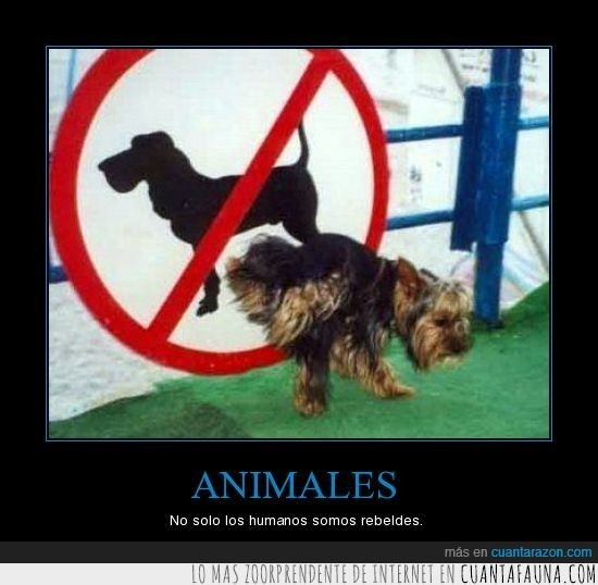 animal,mear,perro,rebelde