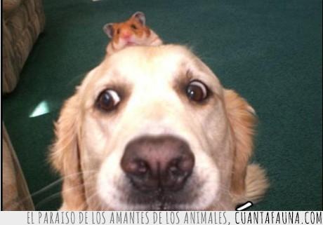 hamster,miedo,perro