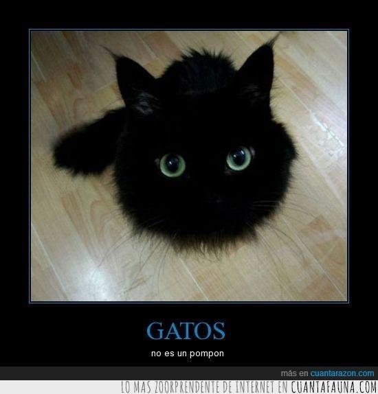 gato,negro,pompon
