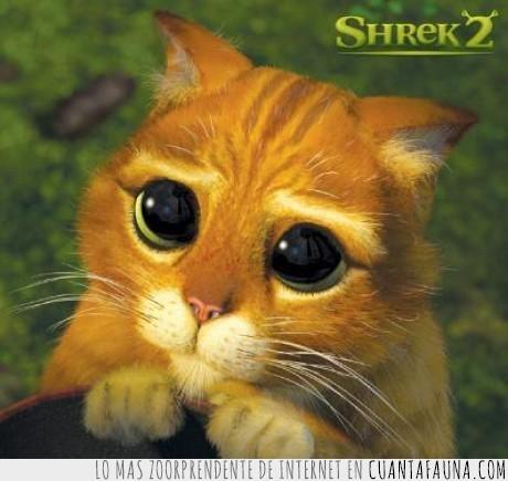 carita,gato,ojos,shrek