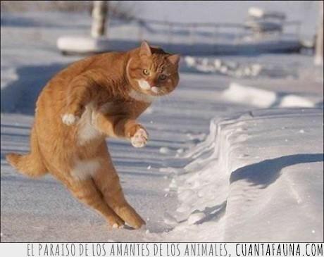 bala,esquivar,gato,nieve,ninja