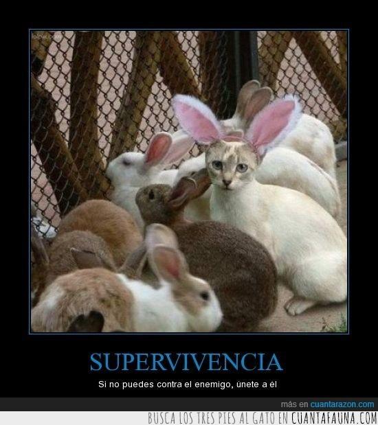 gato,supervivencia