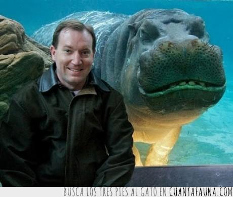 fail,foto,hipopotamo