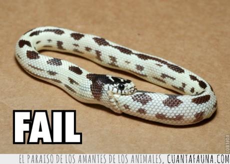 buena,comer,serpiente