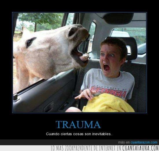 animal,caballo,grito,niño,trauma