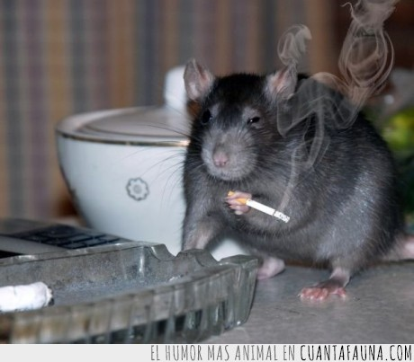 accidente,parecer,rata