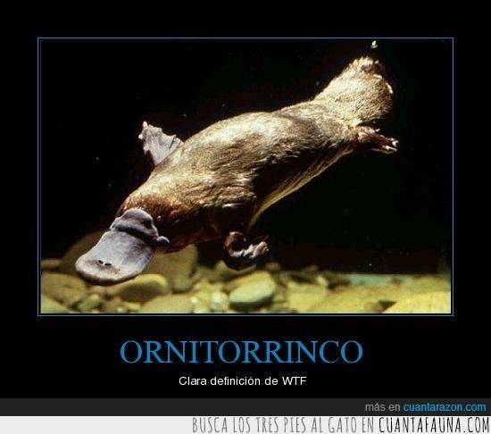 animal,deforme,Ornitorrinco,wtf