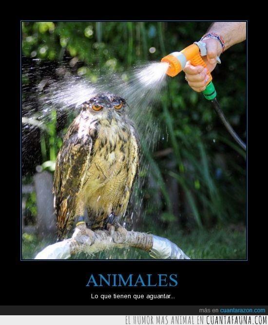 baño,búho,ducha,humanos,manguera