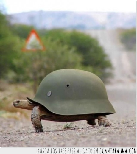 alemanes,cascos,tortuga
