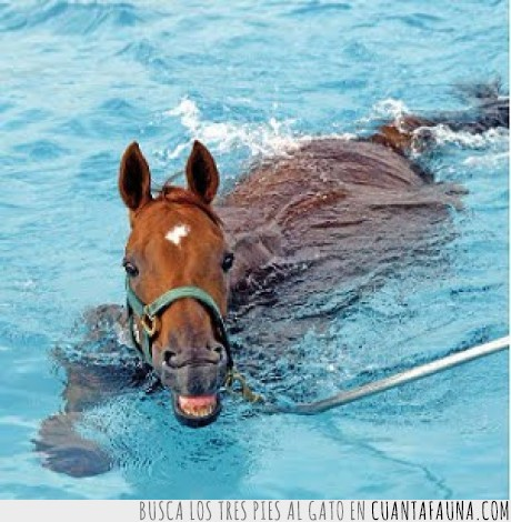 agua,caballito de mar,caballo