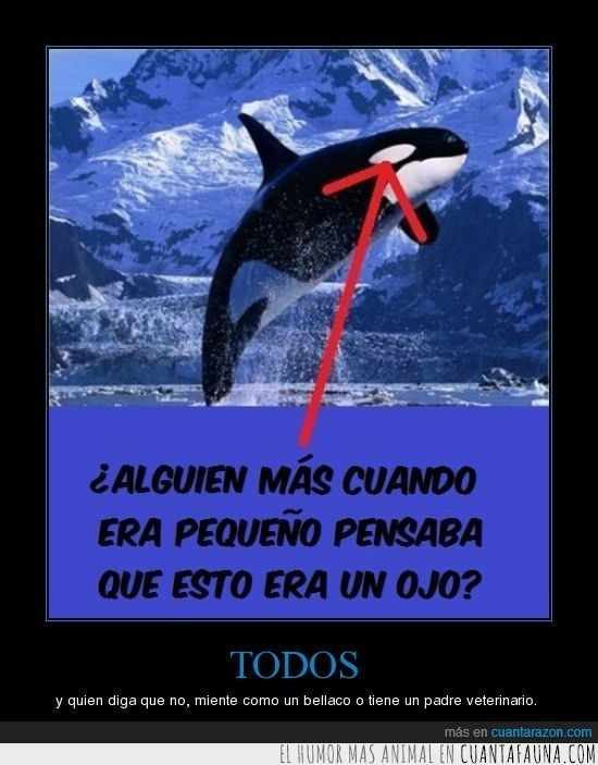 ojo,orca
