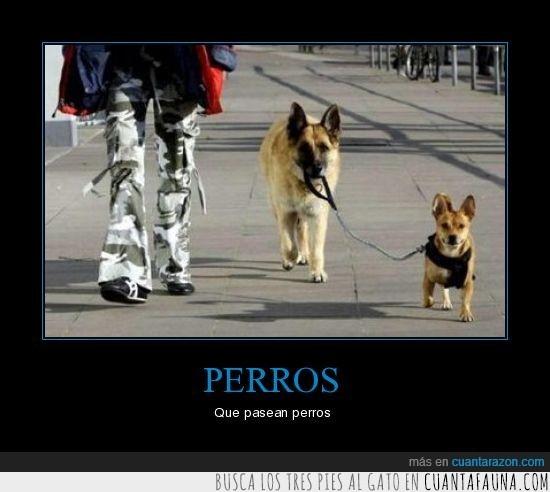 paseo,perro,wtf