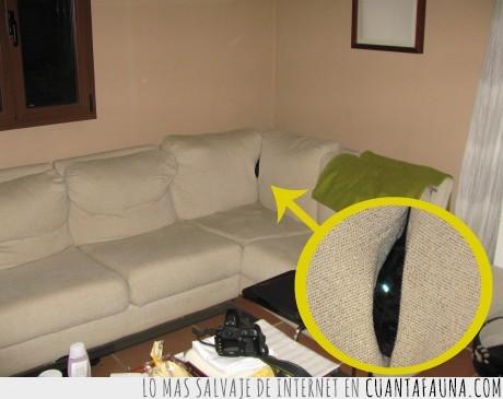 javi,ninja,perro,sofa