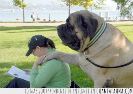 enorme,grande,leer,perro