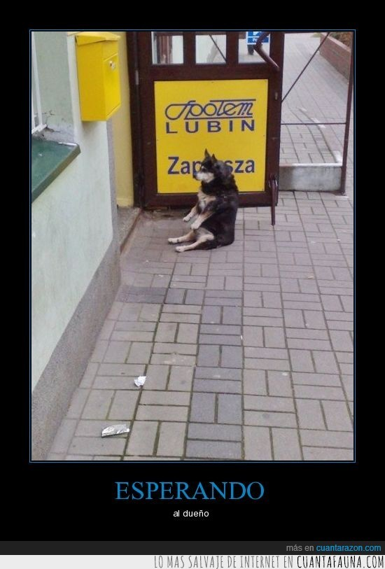 dueño,esperando,perro,sentado