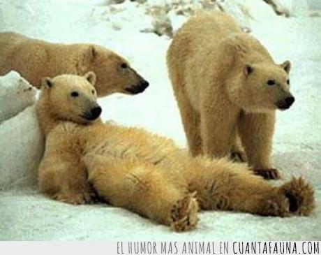 español,oso,perezoso,vago