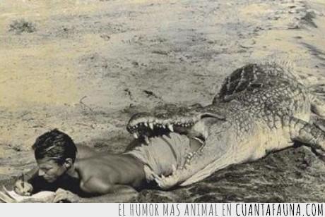 animal,cocodrilo,fail