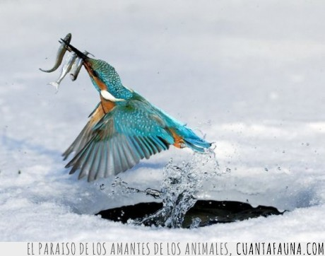 colibrí,peces