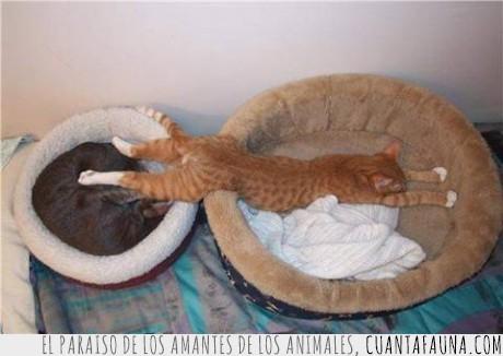 acaparador,acaparadores,animal,animales,cama,dormido,dormir,estirar,estirarse,gato,gatos
