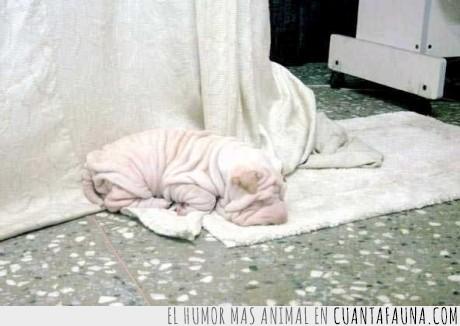 camuflaje,perro,sharpei,toalla